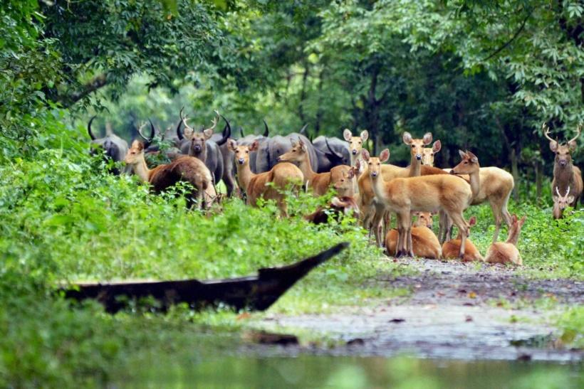 ındia flood animal Kaziranga ile ilgili görsel sonucu