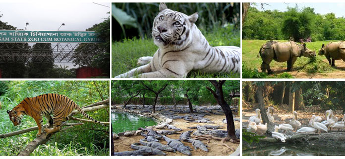 Assam-State-Zoo