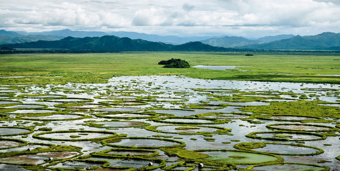 A picture of the floating biomass with rich nutrients for plant growth, locally known as 'phumdis' at the Loktak Lake