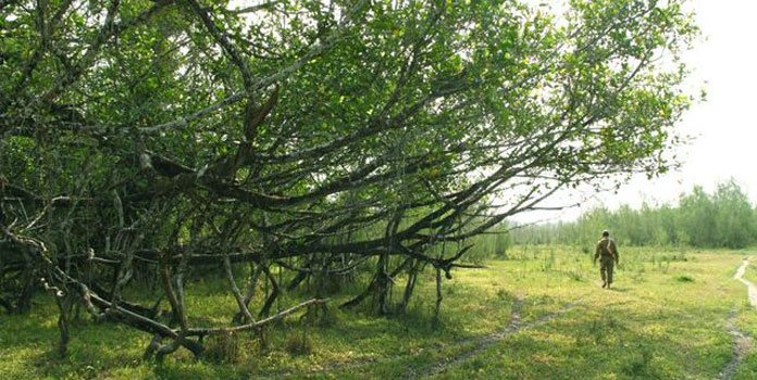 Dibru-Saikhowa National Park picnic